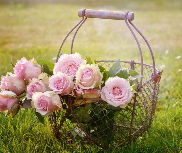 roses-1566792_960_720